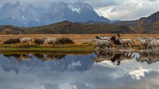 De Salta à la Patagonie Chilienne et Argentine