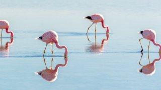 flamants rose Laguna Brava villa union la rioja voyage argentine