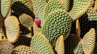 Quebrada de Humahuaca cactus voyage Salta jujuy