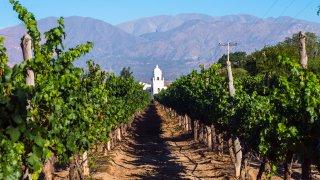 vignes vignobles cafayate voyage Salta Nord-Ouest Argentin