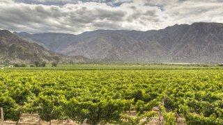 vignes vignobles cafayate voyage Salta