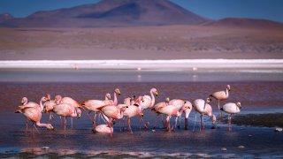 faune nord ouest catamarca salta jujuy argentine