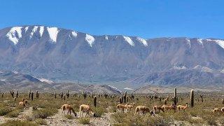 voyage culture andine - parque los cardones - voyage nord ouest argentin