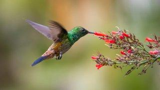 birdwathcing chicoana, voyage argentine nord-ouest Salta