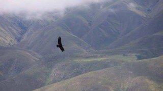 condor faune argentine voyage salta
