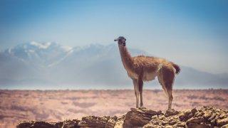 vallée de la lune - San Juan - terra altiplano