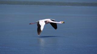 Laguna Santa Maria Flamands roses La Puna Tolar grande voyage salta