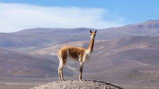 Le blog de Terra Altiplano