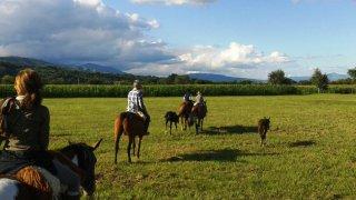 finca valentina - chevaux - terra altiplano voyages