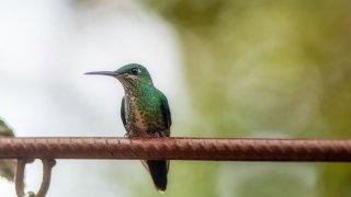 faune et flore nord ouest argentin