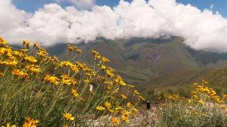 faune et flore salta jujuy voyage argentine