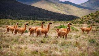 Rayonnez dans le Nord-Ouest Argentin en 10 jours