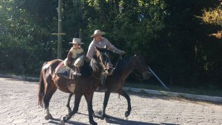chevaux nord ouest argentine
