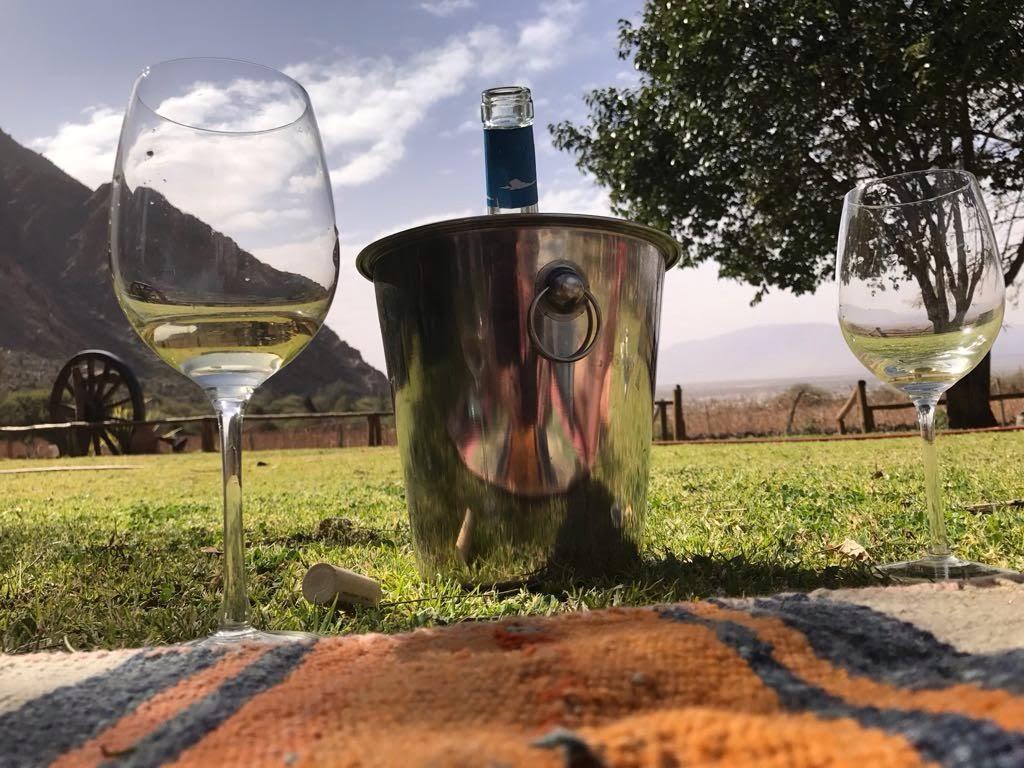 bodega voyage vin oenologie salta