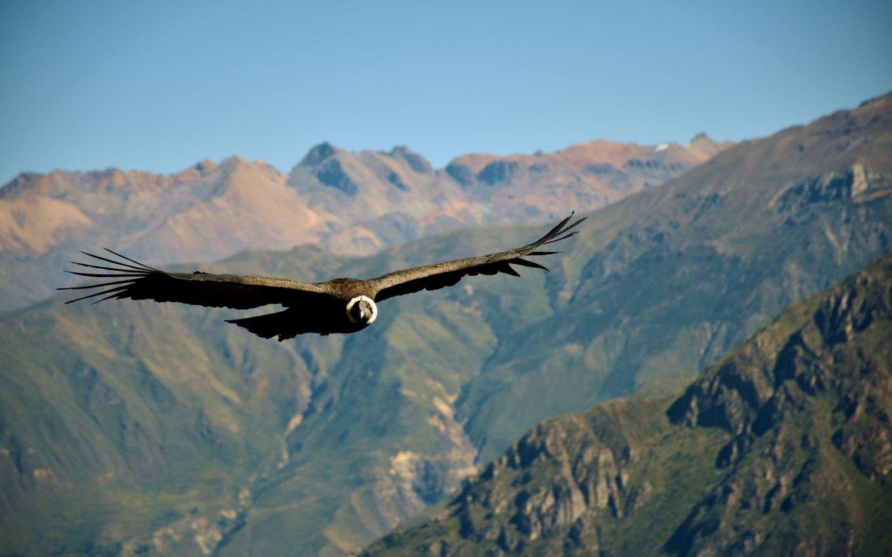 Condor trekking mont torreon salta voyage argentine