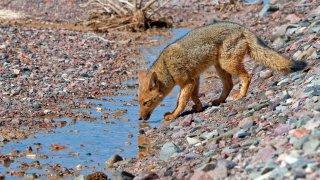 faune du nord ouest argentin