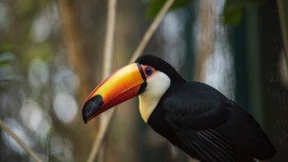 toucan faune flore nord argentine