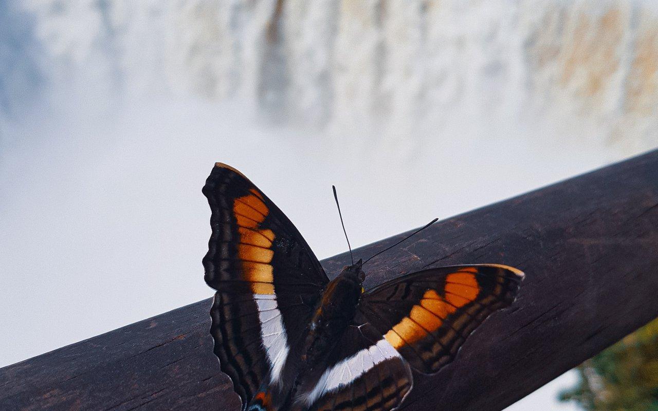 Chutes d'Iguazu, misiones
