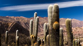 Pucara de Juella, Quebrada de Humahuaca, Province de Jujuy, Argentine