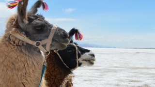 voyages famille altiplano