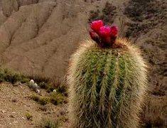 Région de Jujuy voyage argentine Terra Altiplano