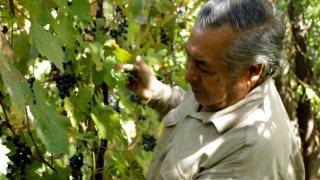 vin bodega trassoles - voyage argentine vignobles