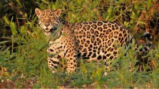 faune salta jujuy voyage argentine terra altiplano